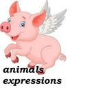 حیوانات در اصطلاحات آمریکایی(VOA)