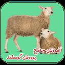 آموزش جامع پرورش گوسفند