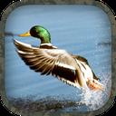 Duck Hunting Calls