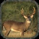 Whitetail Hunting Calls
