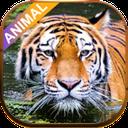 صدای واقعی حیوانات(صدای حیوانات)