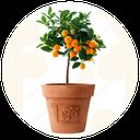سبزیجات گلدانی